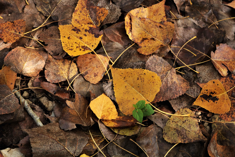 Parco forestale di Calaforno Keration escursioni foglie